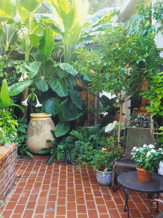 taman gaya Mediterranean dengan tumbuhan tropis