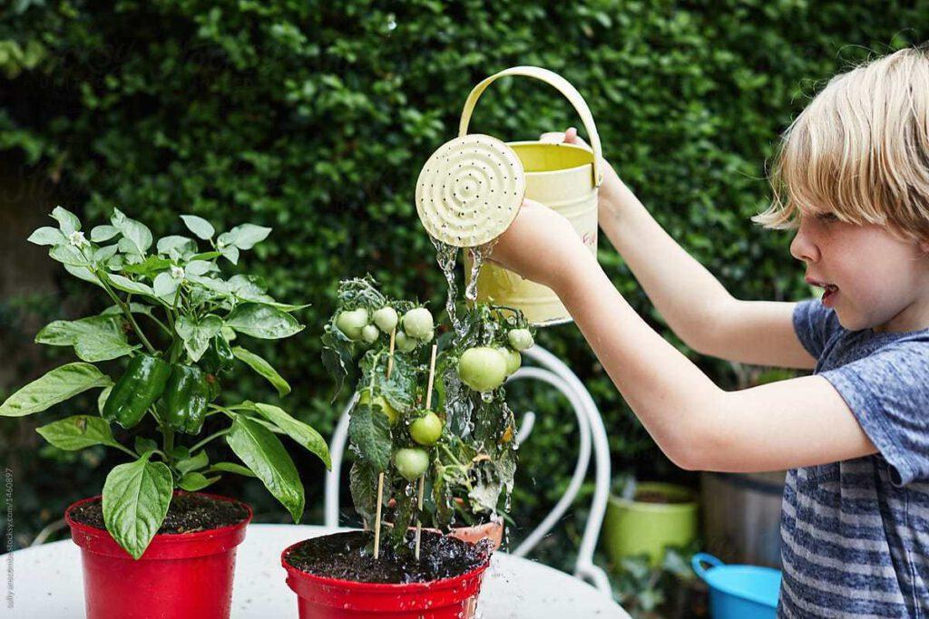 Melakukan Metode Penyiraman yang Tepat