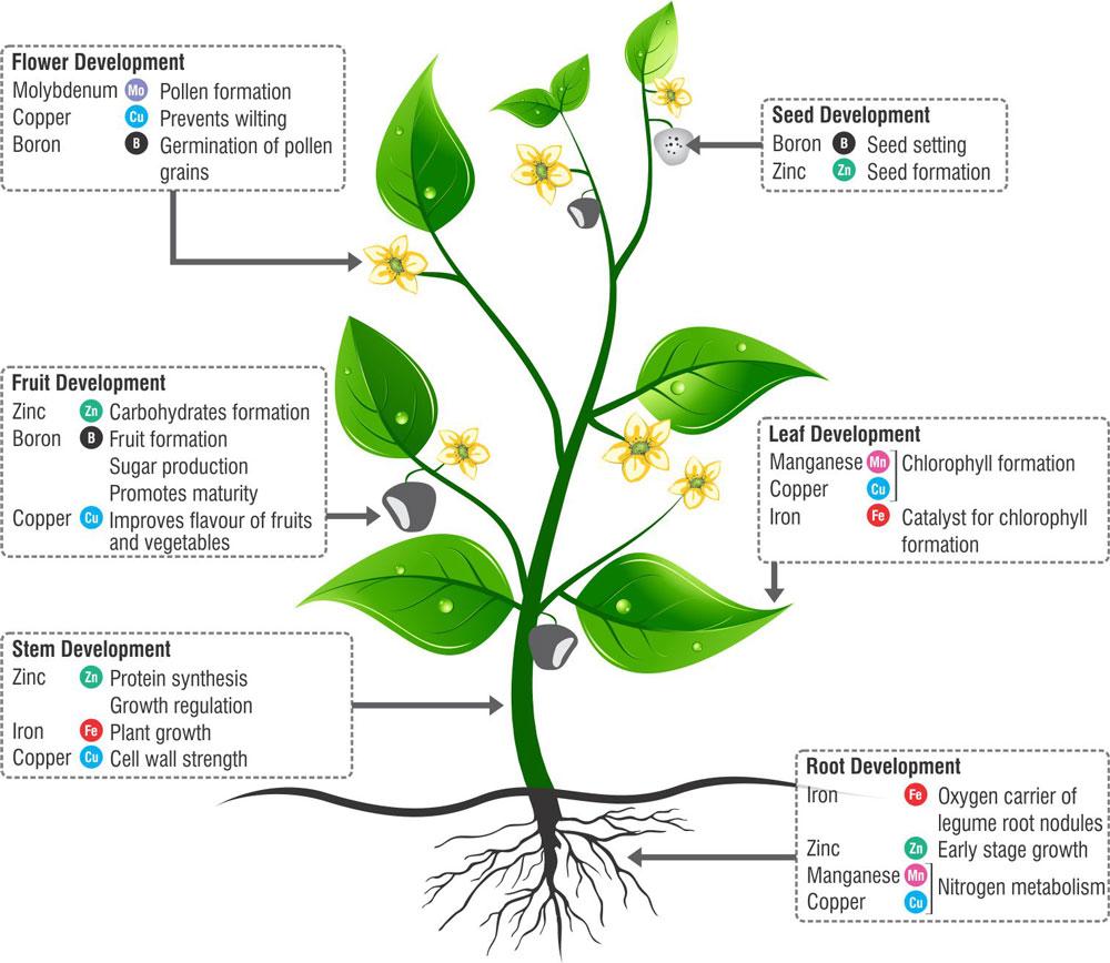 Memberikan Nutrisi yang Vital bagi Bunga